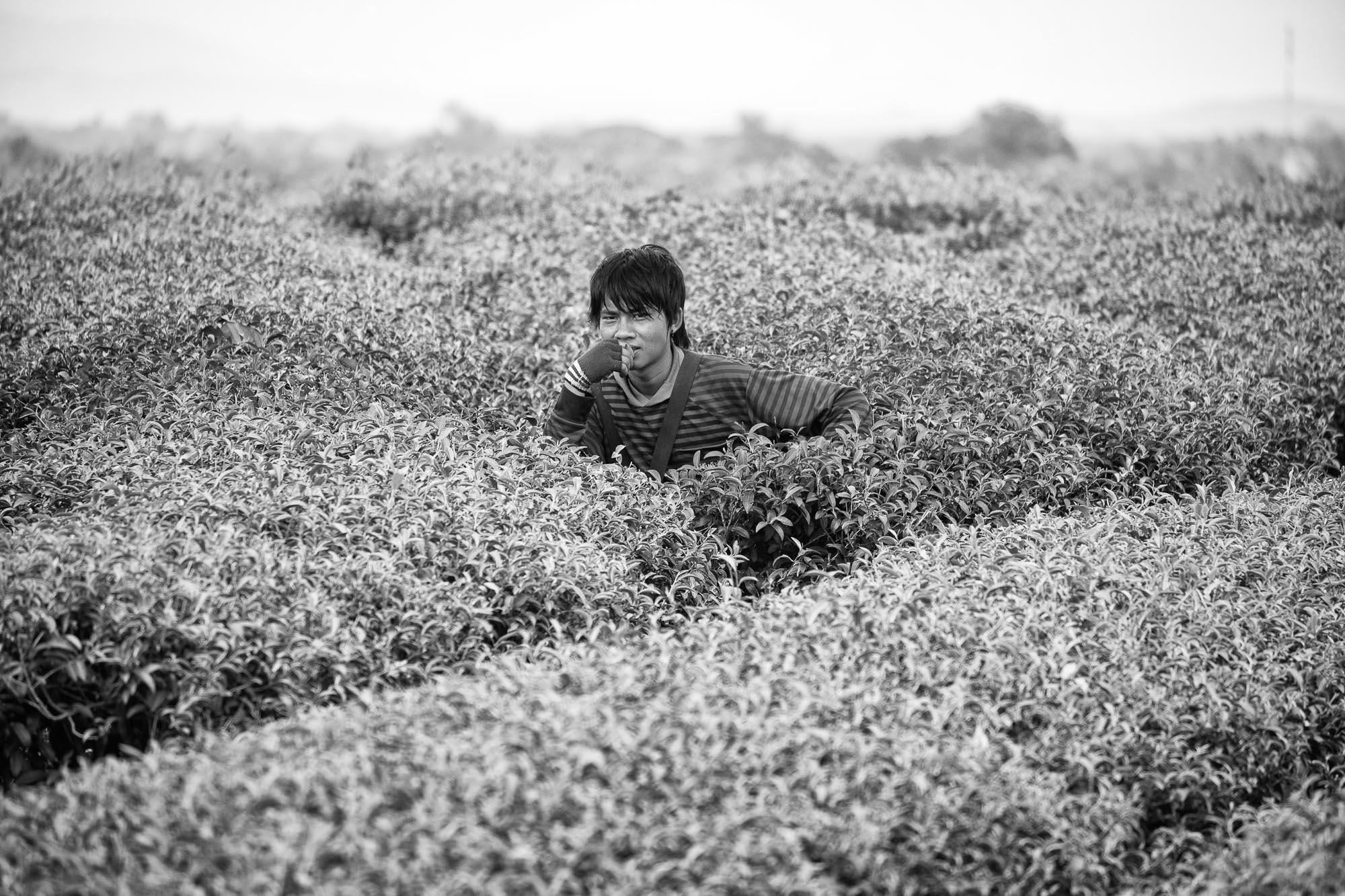 PLANTATION Chiang rai thailand asia tea pineapple rise man