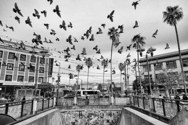 SAN FRANCISCO california ca untited states usa street photography pigeon bird subway station