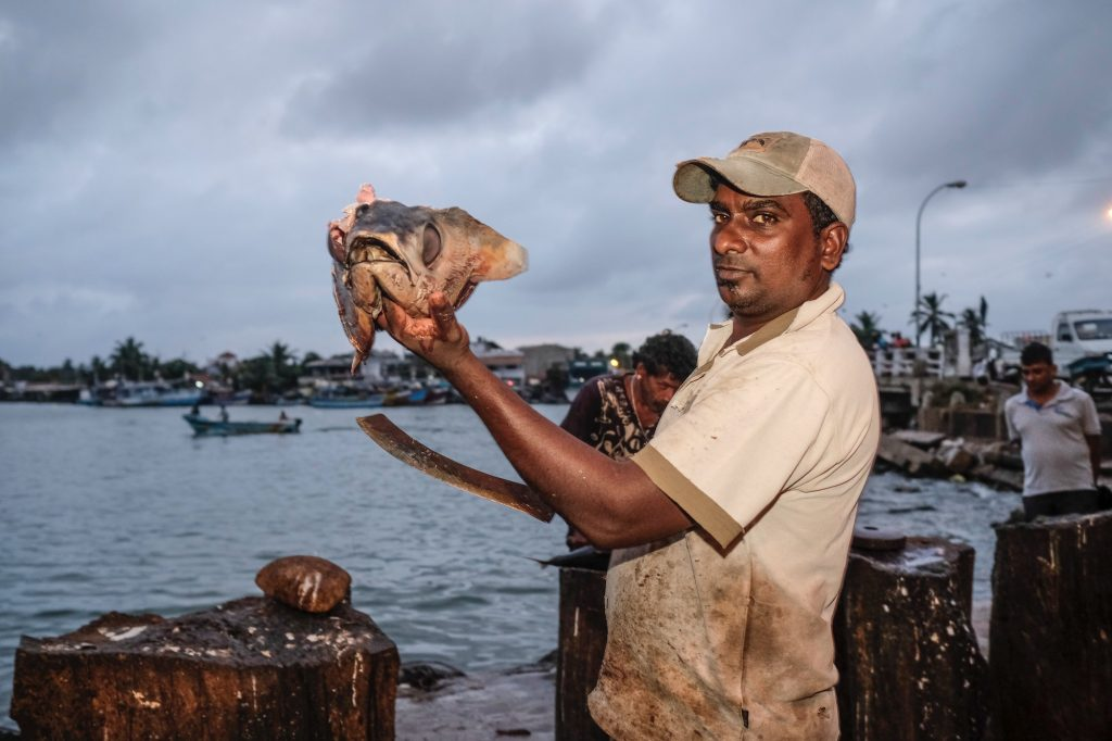 Fish Market Negombo Sri Lanka Travel Fujifilm XE3