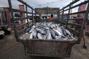 Fish Market Negombo Sri Lanka Travel Photography Fujifilm XE3