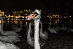 white swam street photography Fujifilm CZ prague jose jeuland