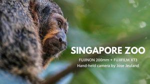 SINGAPORE ZOO Video FUJIFILM X-T3 FUJINON 200mm Monkey