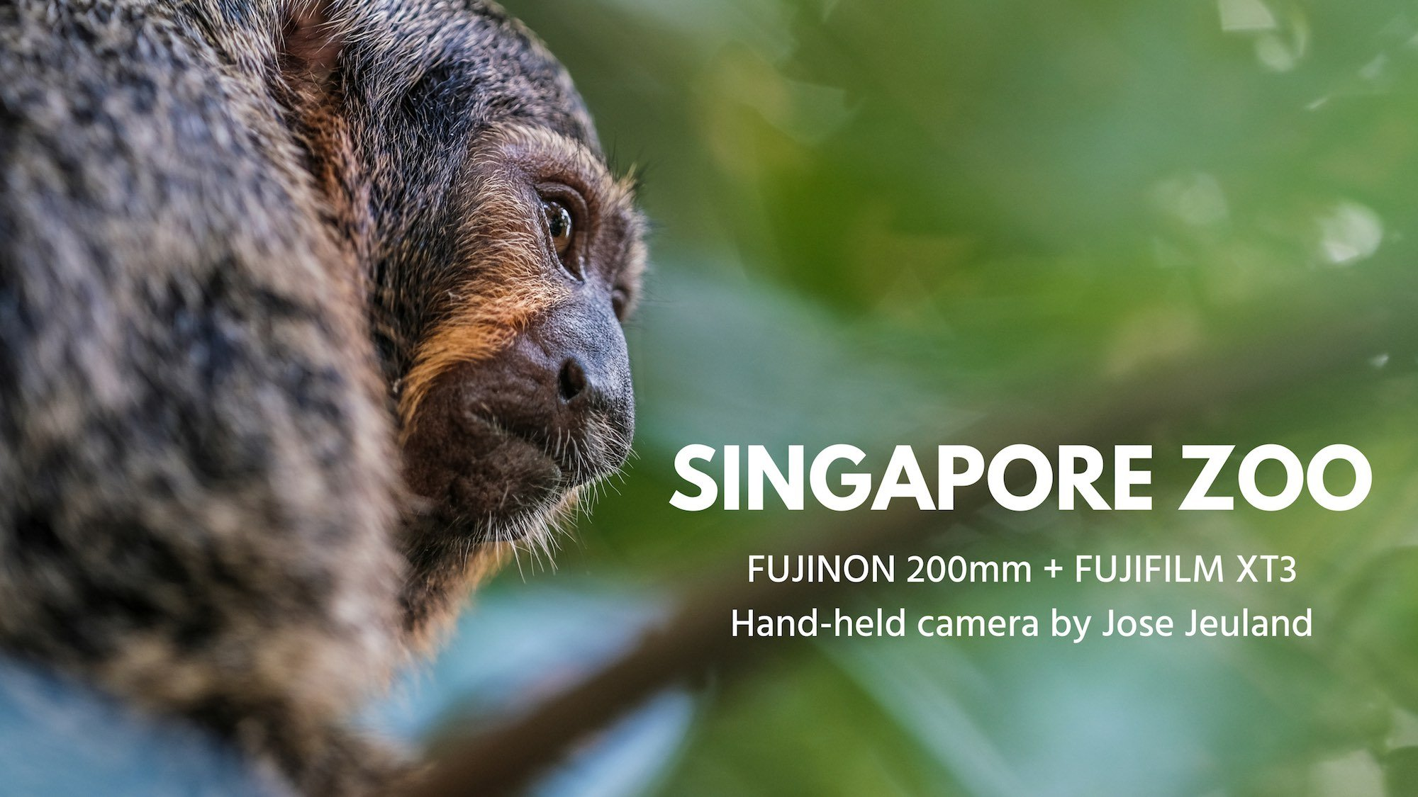SINGAPORE ZOO Video FUJIFILM X-T3 FUJINON 200mm Monkey