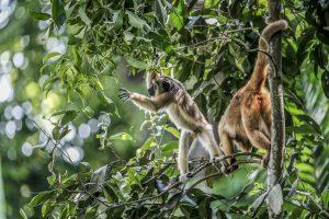 Singapore zoo animals fujinon 200mm f2 fujifilm XT3 white monkey