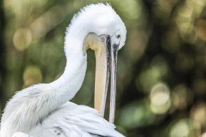 Singapore zoo animals fujinon 200mm f2 fujifilm XT3 white bird