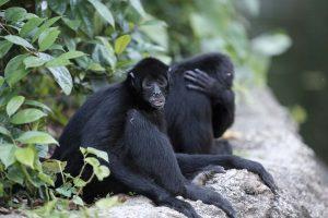 Singapore zoo animals fujinon 200mm f2 fujifilm XT3 black monkey