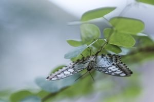 Singapore zoo animals fujinon 200mm f2 fujifilm XT3 Butterfly