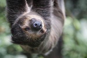 Singapore zoo animals fujinon 200mm f2 fujifilm XT3 slow monkey