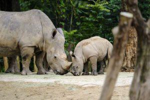 Singapore zoo animals fujinon 200mm f2 fujifilm XT3 Leopard