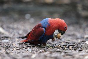 Singapore zoo animals fujinon 200mm f2 fujifilm XT3 bird