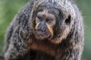 Singapore zoo animals fujinon 200mm f2 fujifilm XT3 monkey
