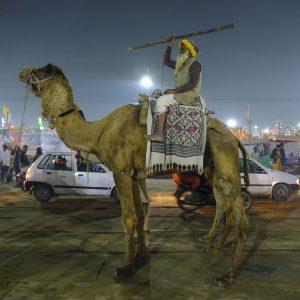 camel show night pilgrims Kumbh mela 2019 India Allahabad Prayagraj Ardh hindu religious Festival event rivers photographer jose jeuland photography