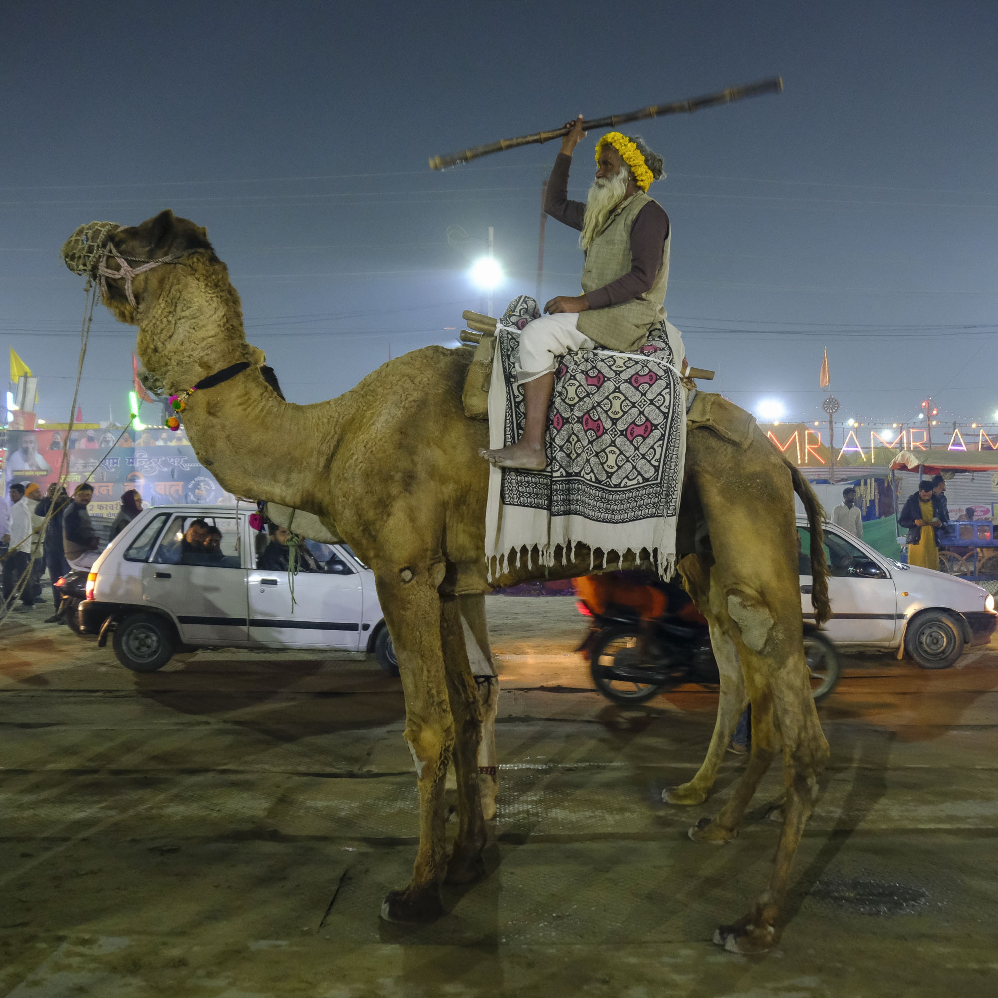 camel show night pilgrims Kumbh mela 2019 India Allahabad Prayagraj Ardh hindu religious Festival event rivers photographer jose jeuland photography