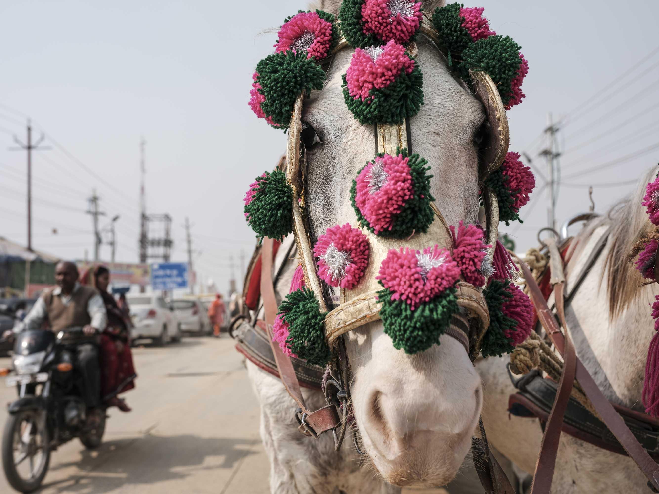 white horse camp pilgrims Kumbh mela 2019 India Allahabad Prayagraj Ardh hindu religious Festival event rivers photographer jose jeuland photography