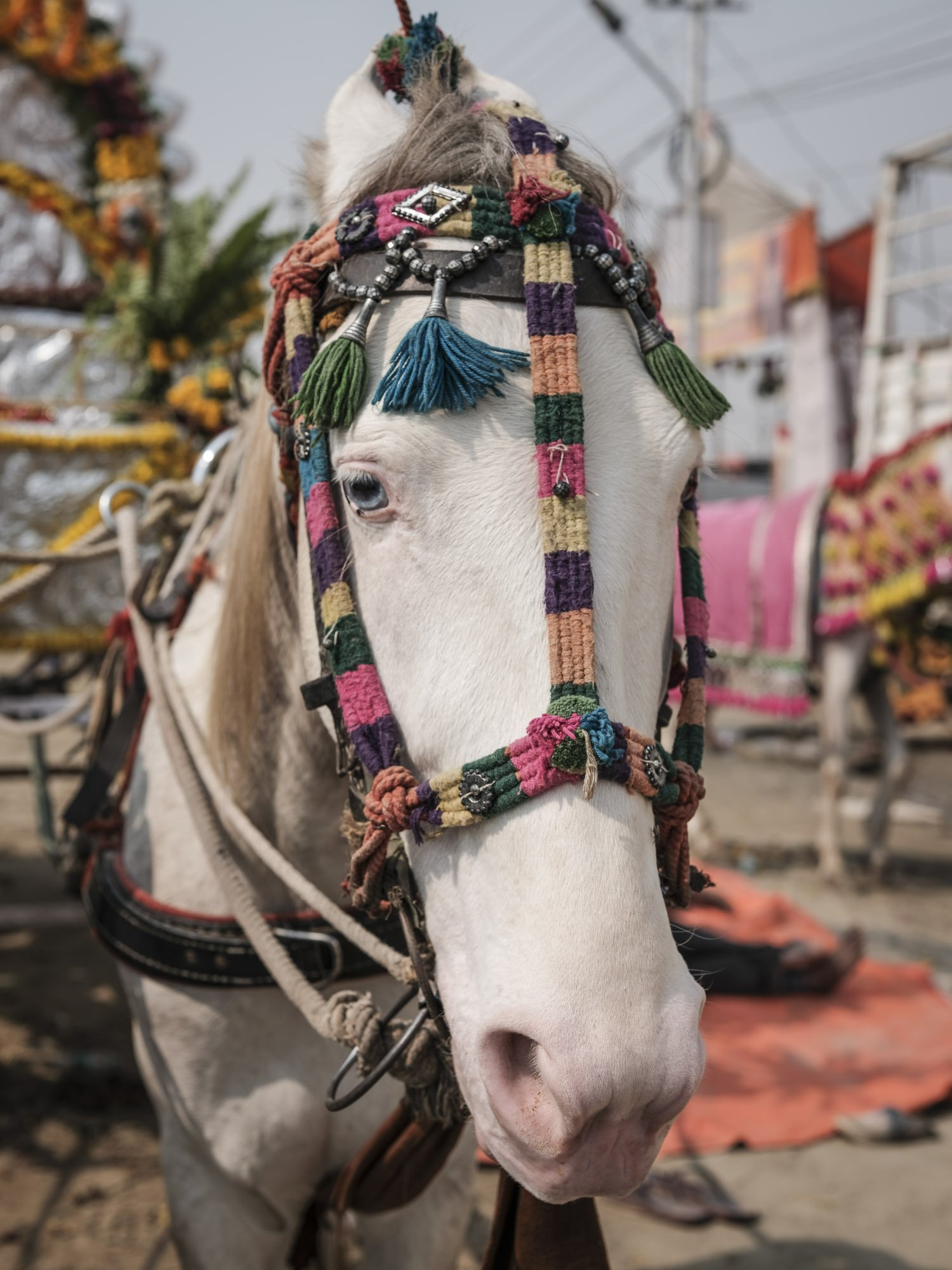 white horse pilgrims Kumbh mela 2019 India Allahabad Prayagraj Ardh hindu religious Festival event rivers photographer jose jeuland photography