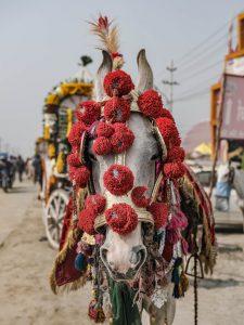 horse red pilgrims Kumbh mela 2019 India Allahabad Prayagraj Ardh hindu religious Festival event rivers photographer jose jeuland photography