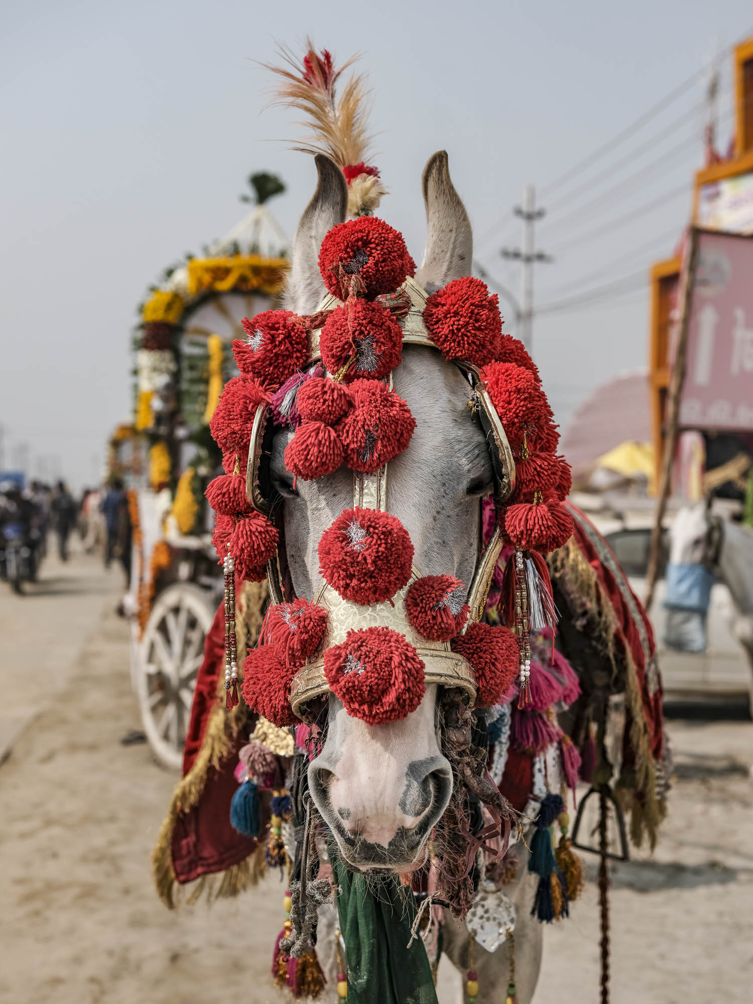 horse red pilgrims Kumbh mela 2019 India Allahabad Prayagraj Ardh hindu religious Festival event rivers photographer jose jeuland photography