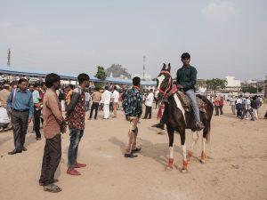 horse riding Gypsy Kalbelia tribe nomad Rajasthan India Documentary Photography Jose Jeuland Photographer print fine art