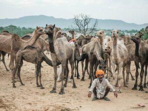 Pushkar Travel Documentary Photography India Jose Jeuland-3