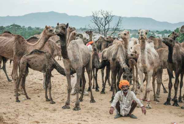 Pushkar Travel Documentary Photography India Jose Jeuland-3