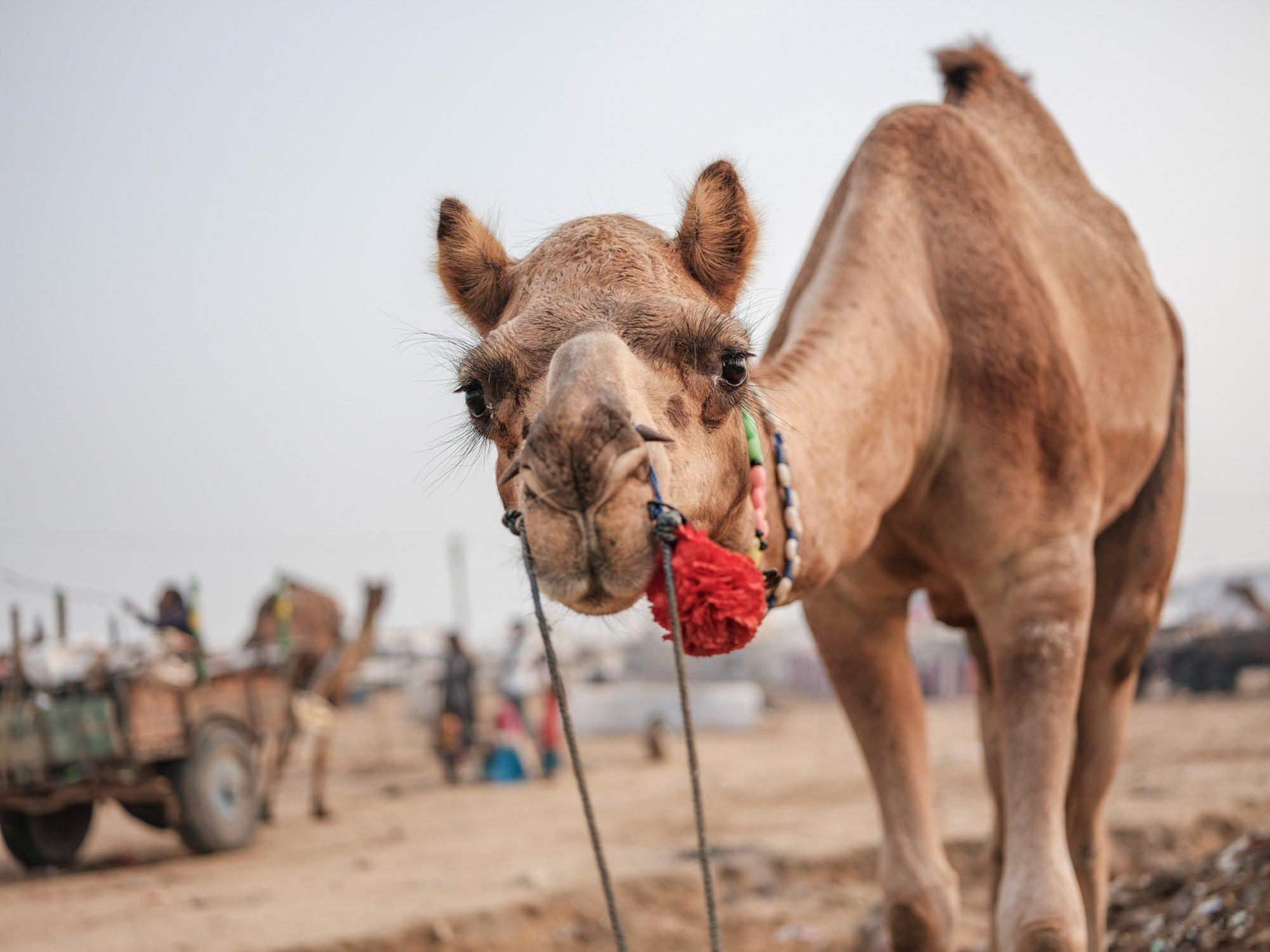 Pushkar Travel Documentary Photography India Jose Jeuland-4