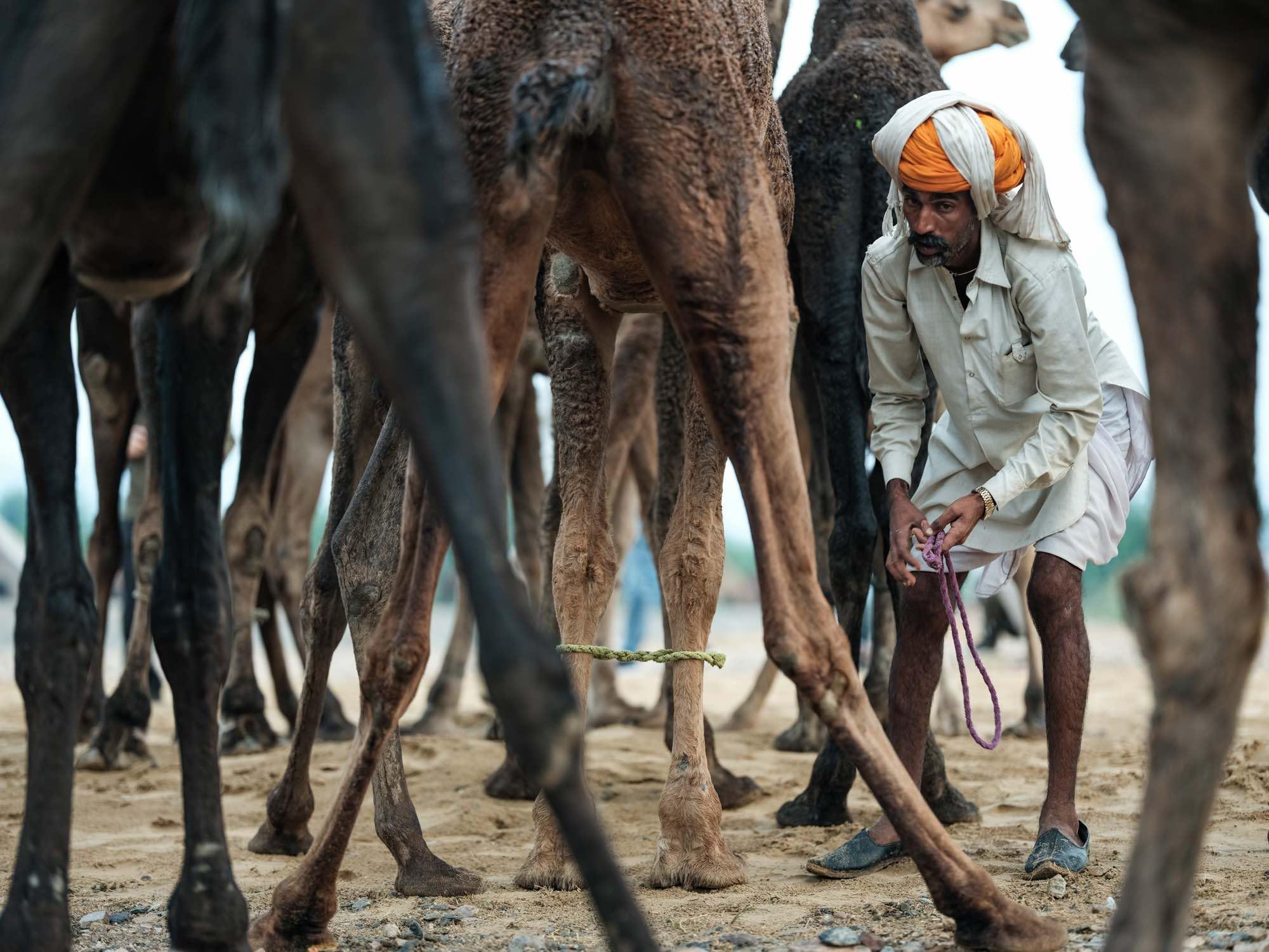 Pushkar Camel Fair Travel Documentary Photography India Jose Jeuland-1-2
