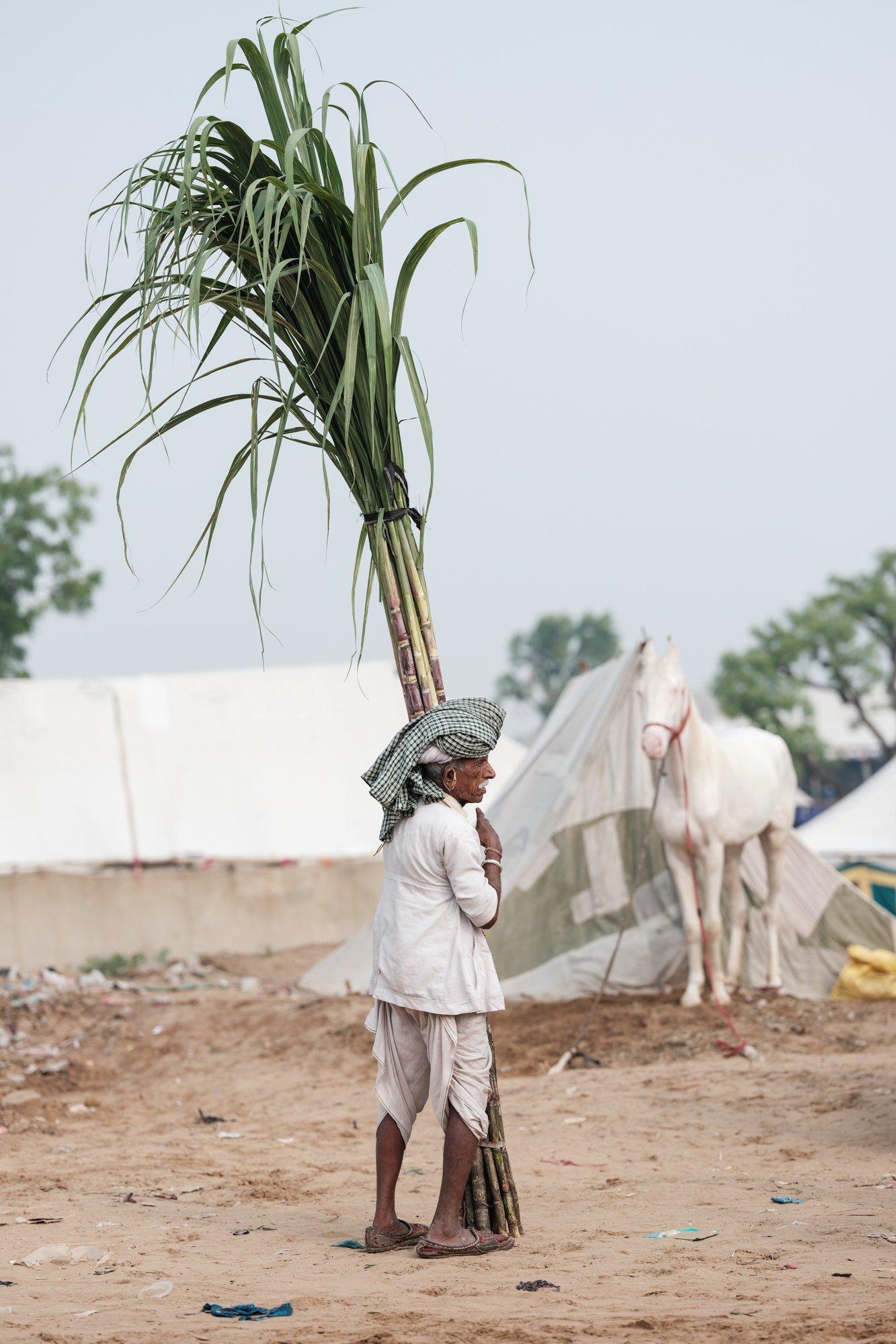 Pushkar Camel Fair Travel Documentary Photography India Jose Jeuland-7-4